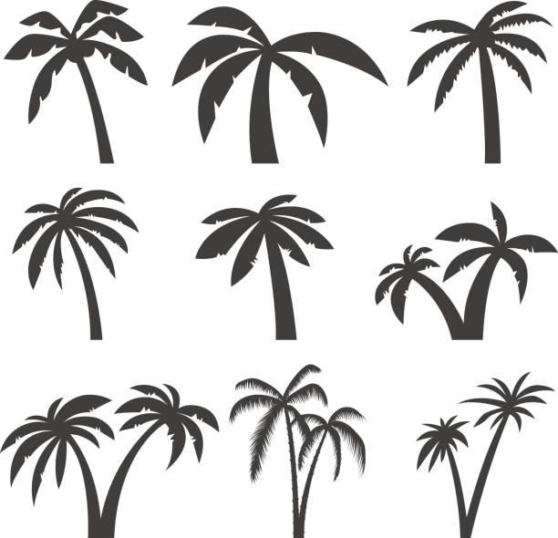 Best Palm Tree Illustrations, Royalty.