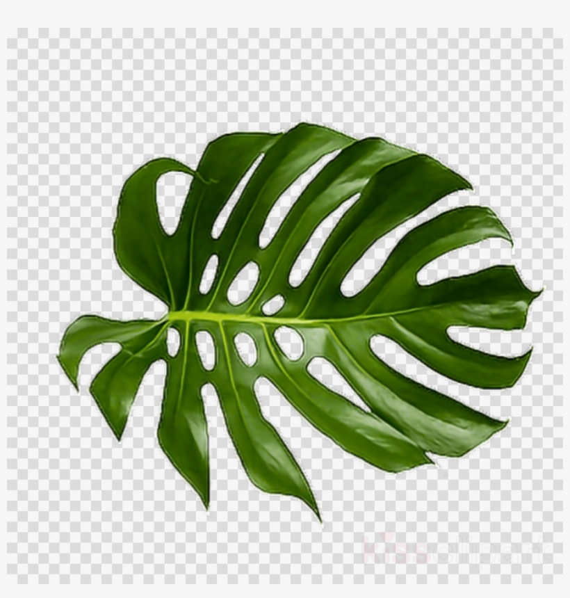 Tropical Leaf Png Clipart Palm Trees Leaf Clip Art.