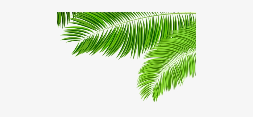 Green Tropical Leaf Png K Pictures Full.