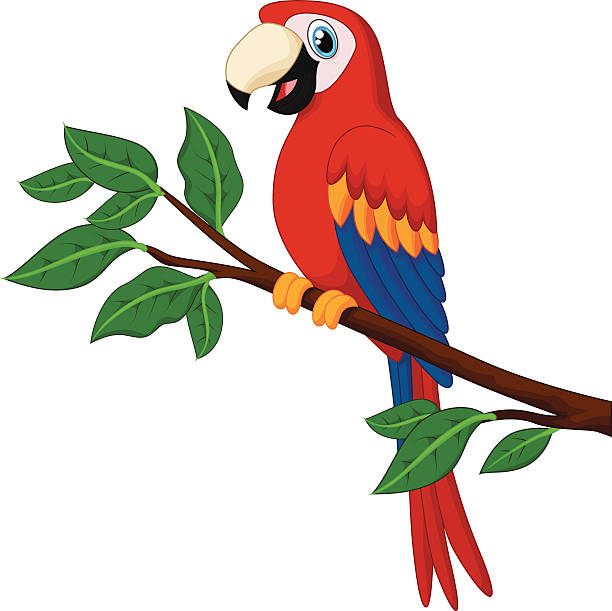 Best Parrot Illustrations, Royalty.