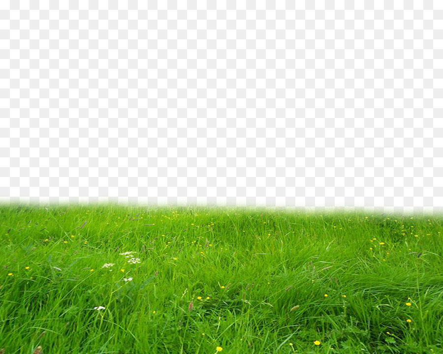 Grass Background png download.