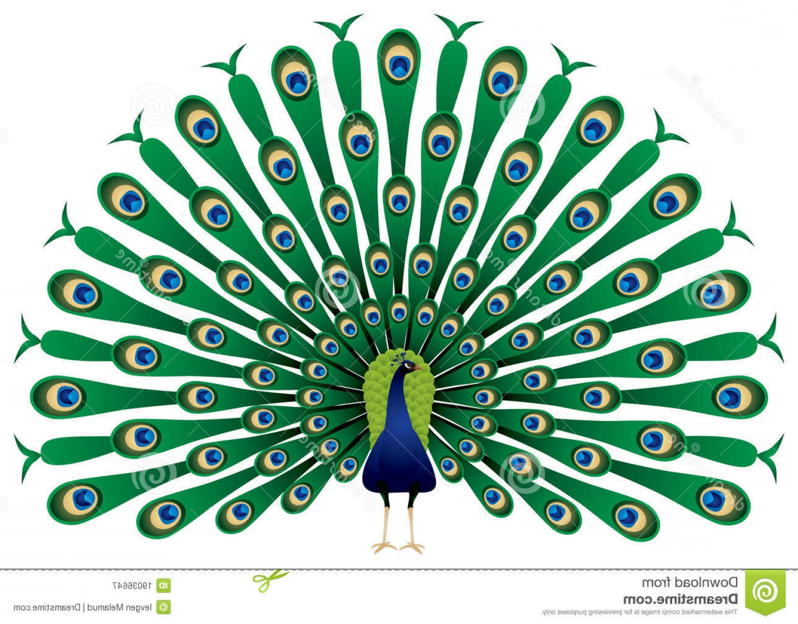 Peacock Feather Vector Free Graphics And Art Jobspapa Awesome.