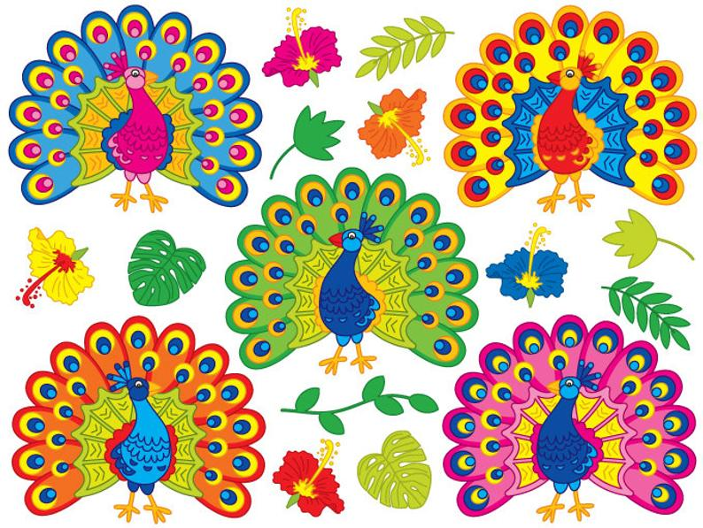 Peacock Clipart.