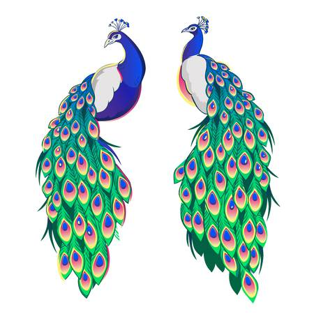 13,733 Peacock Stock Illustrations, Cliparts And Royalty Free.