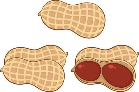 7,635 Peanut Stock Illustrations, Cliparts And Royalty Free Peanut.
