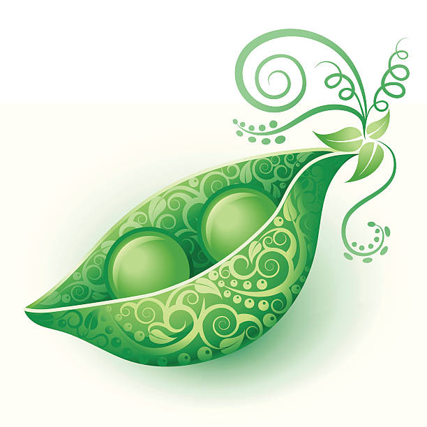 Best Pea Pod Illustrations, Royalty.