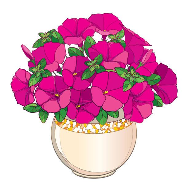 Best Petunia Illustrations, Royalty.