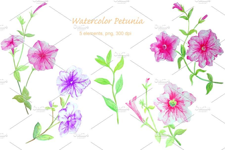 Watercolor Flower Petunia Clipart.
