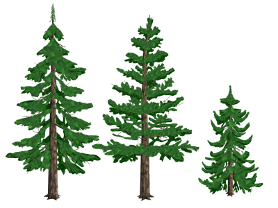Download PINE TREE Free PNG transparent image and clipart.