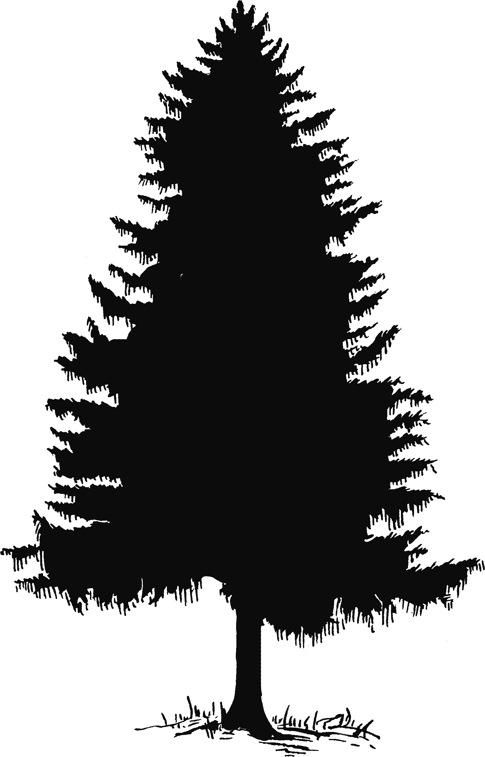 Tall Pine Tree Silhouette Png (+).