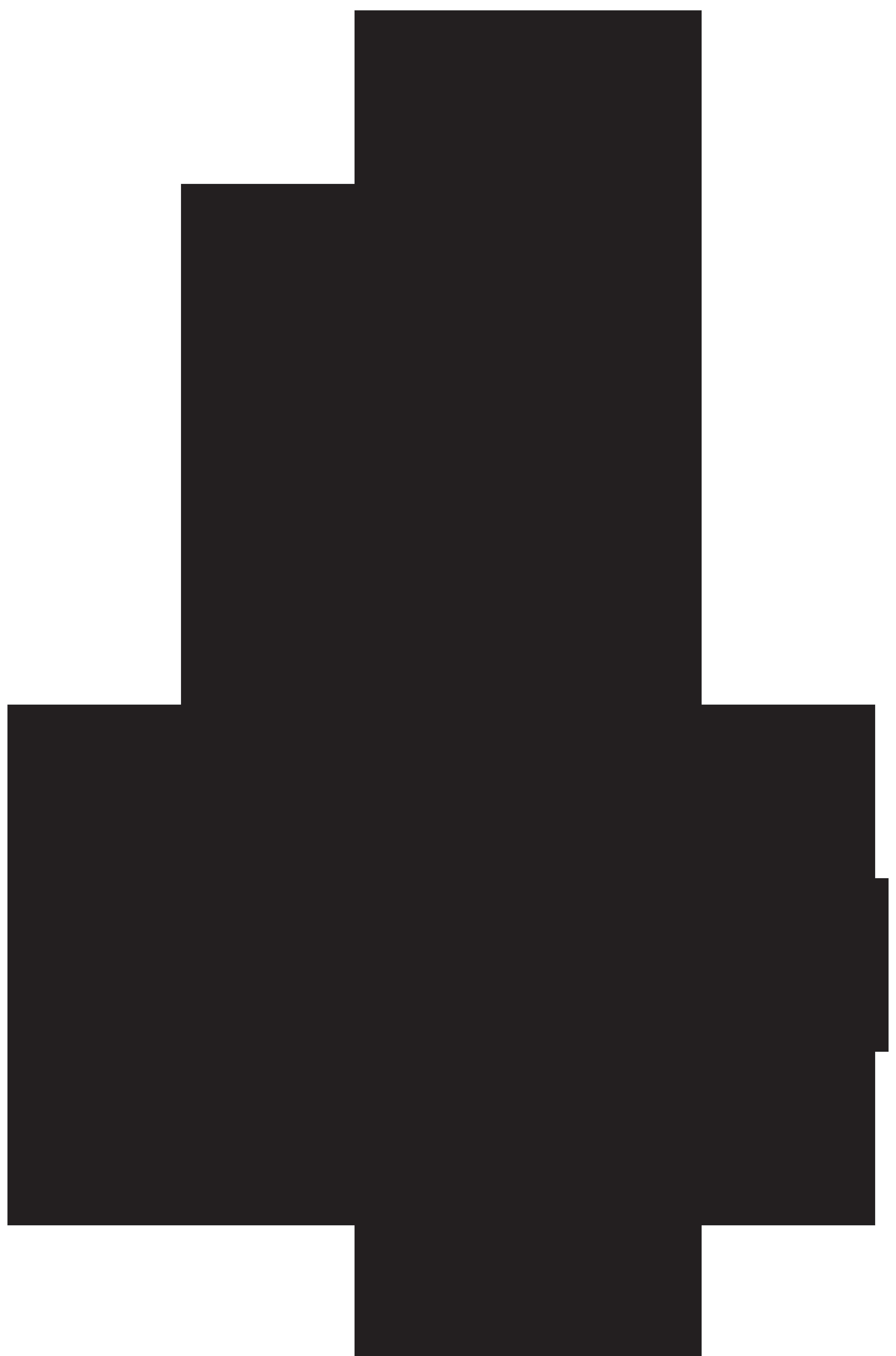 Black pine Tree Pinus contorta.