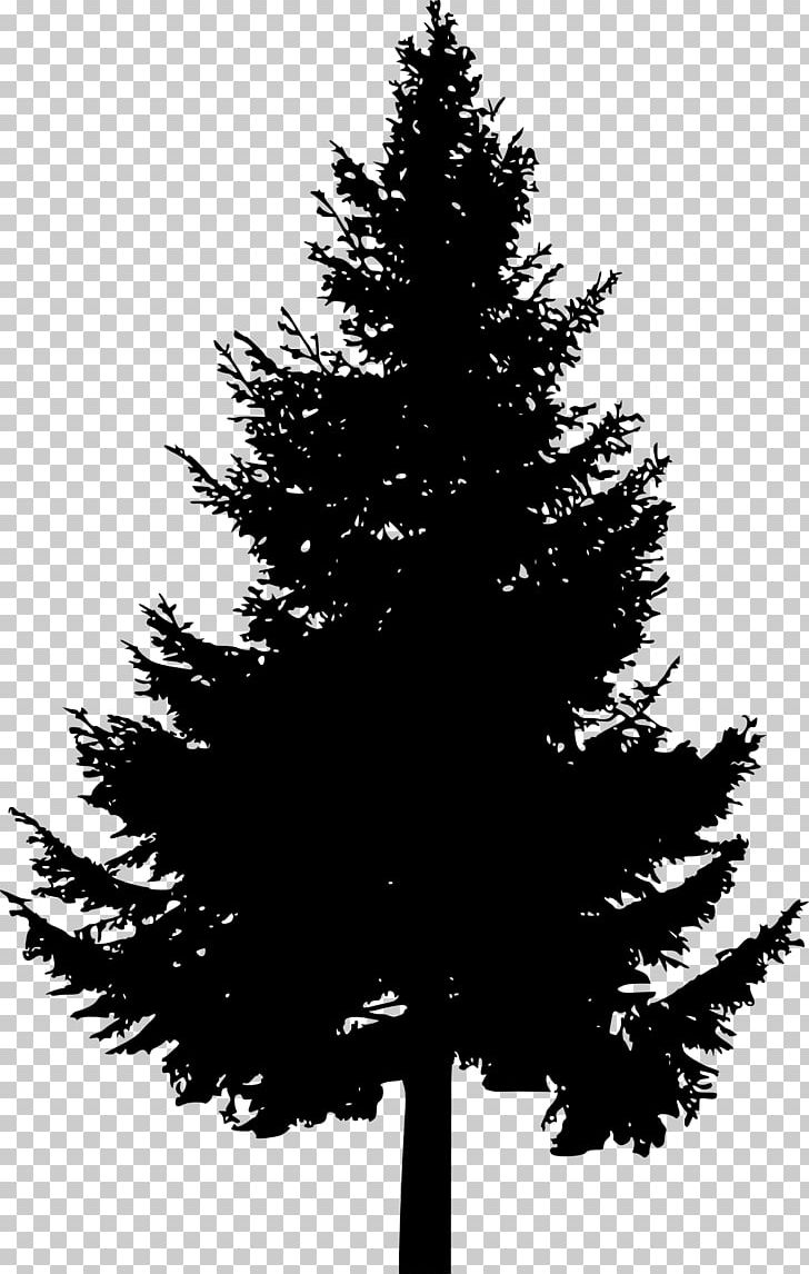Pine Tree Silhouette PNG, Clipart, Black And White, Branch.