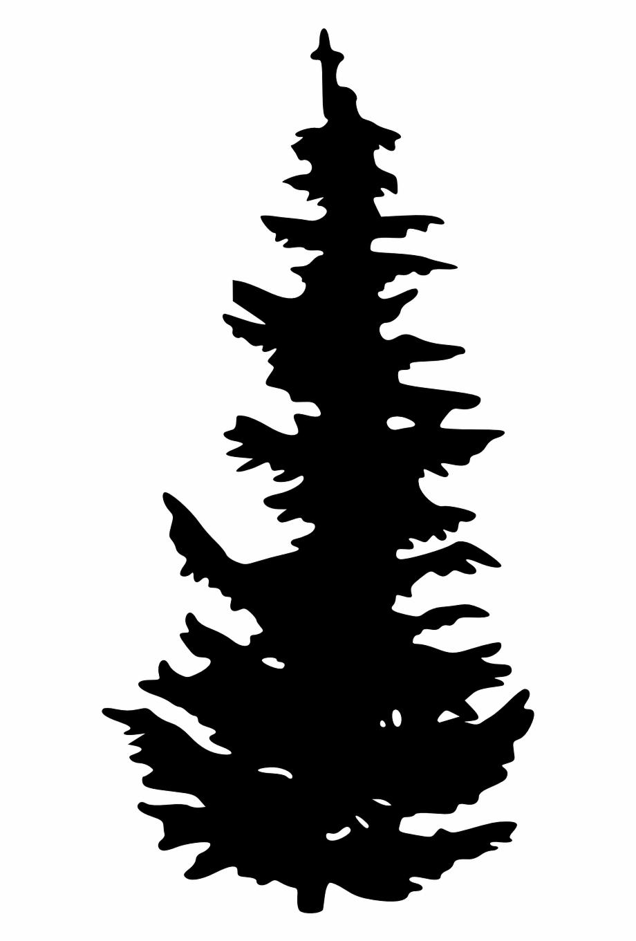 Silhouette, Schwarz, Pflanze, Baum, Wächst, Kiefer.