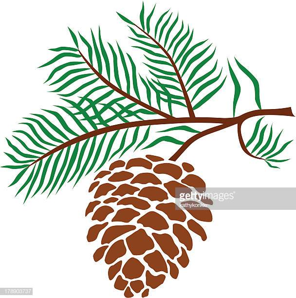 60 Top Pine Cone Stock Illustrations, Clip art, Cartoons, & Icons.