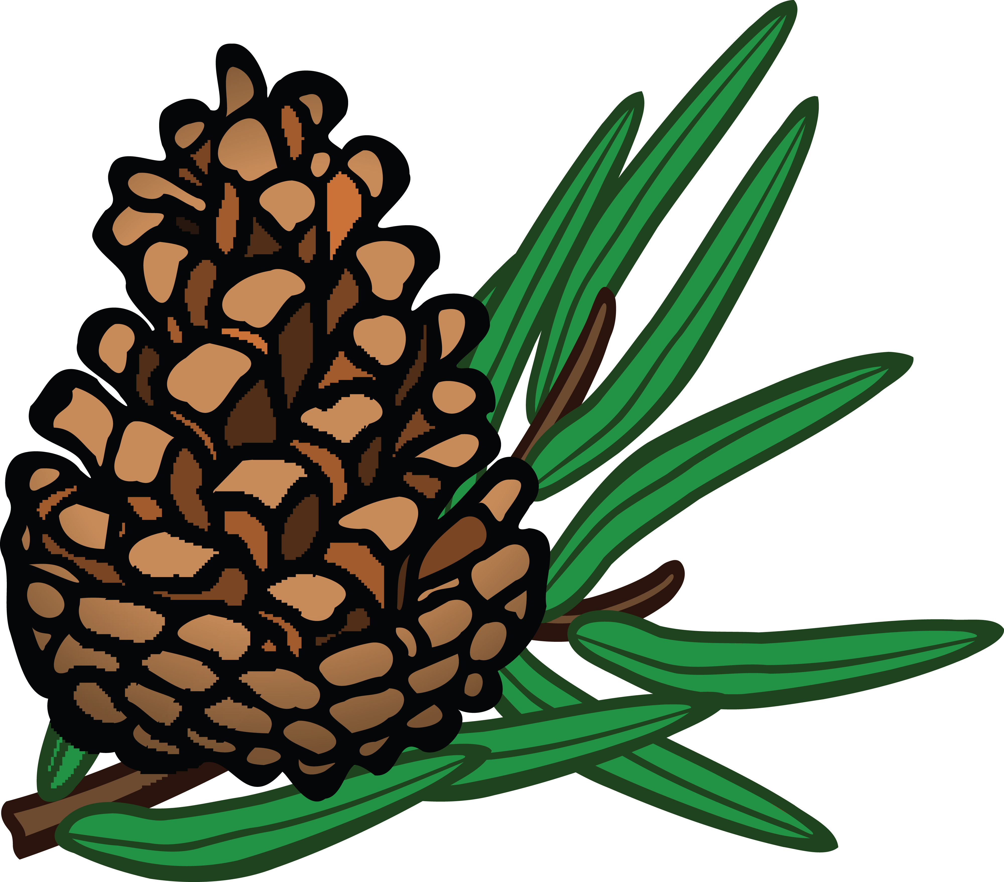 Free Clipart Of A pinecone.