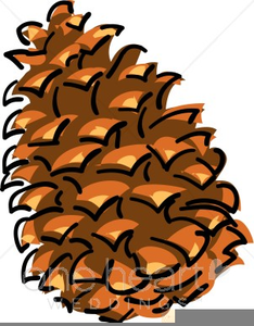 Pinecone Clipart.