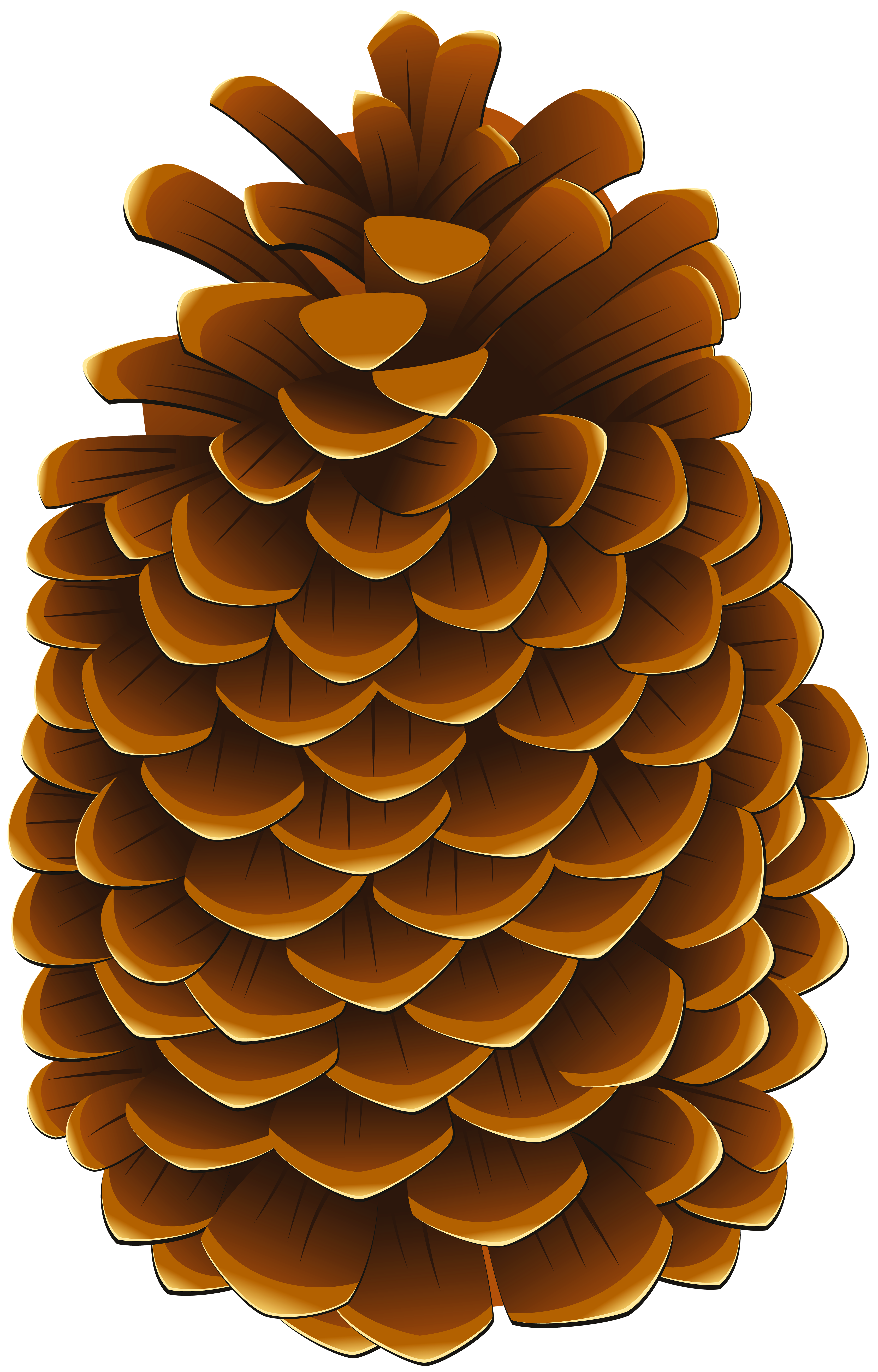 Pinecone PNG Clip Art Image.