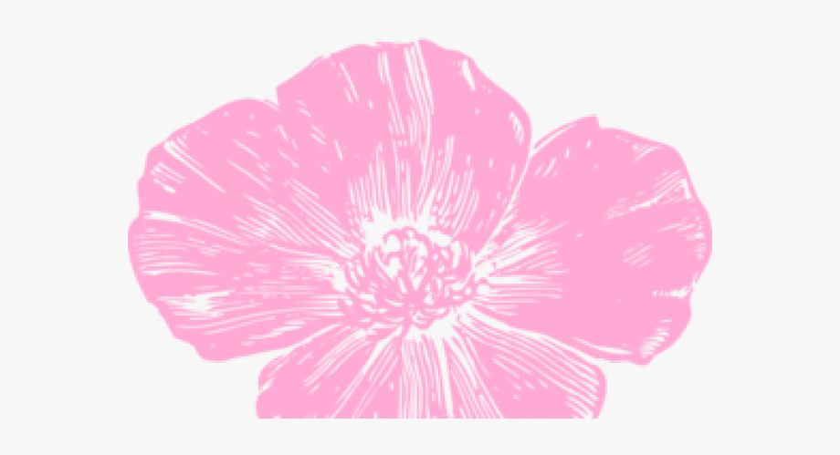 Poppy Clipart Pink Poppy.