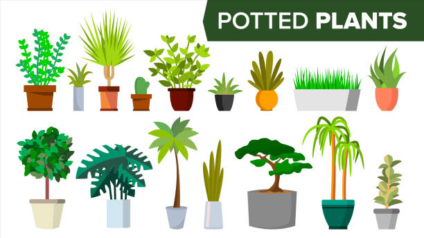 Best Potted Plant Illustrations, Royalty.