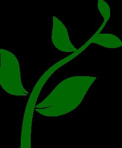 Growing Plant clip art.