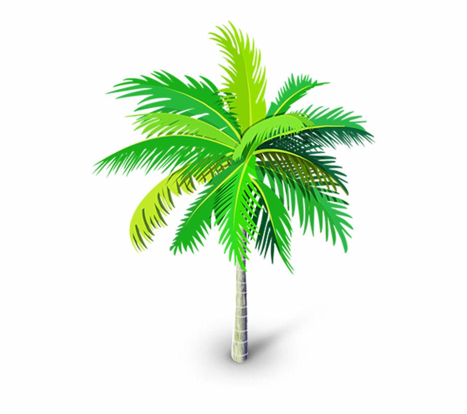 Palm Tree Png, Palm Trees, Youtube Thumbnail, Tree.