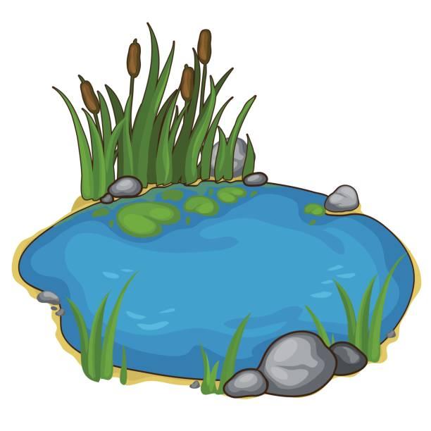 Best Pond Illustrations, Royalty.