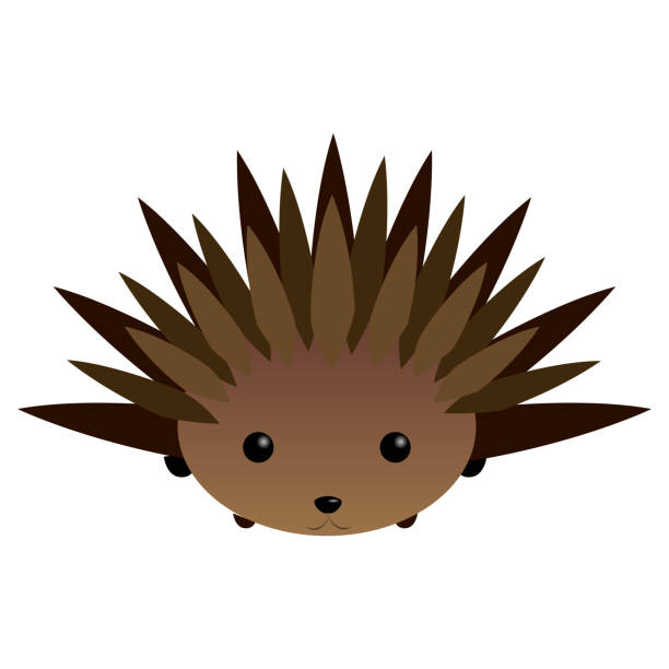 Top 60 Cute Porcupine Clip Art Vector Graphics And Complete Clipart.