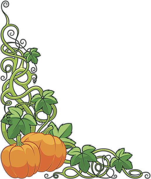 Best Pumpkin Vines Illustrations, Royalty.
