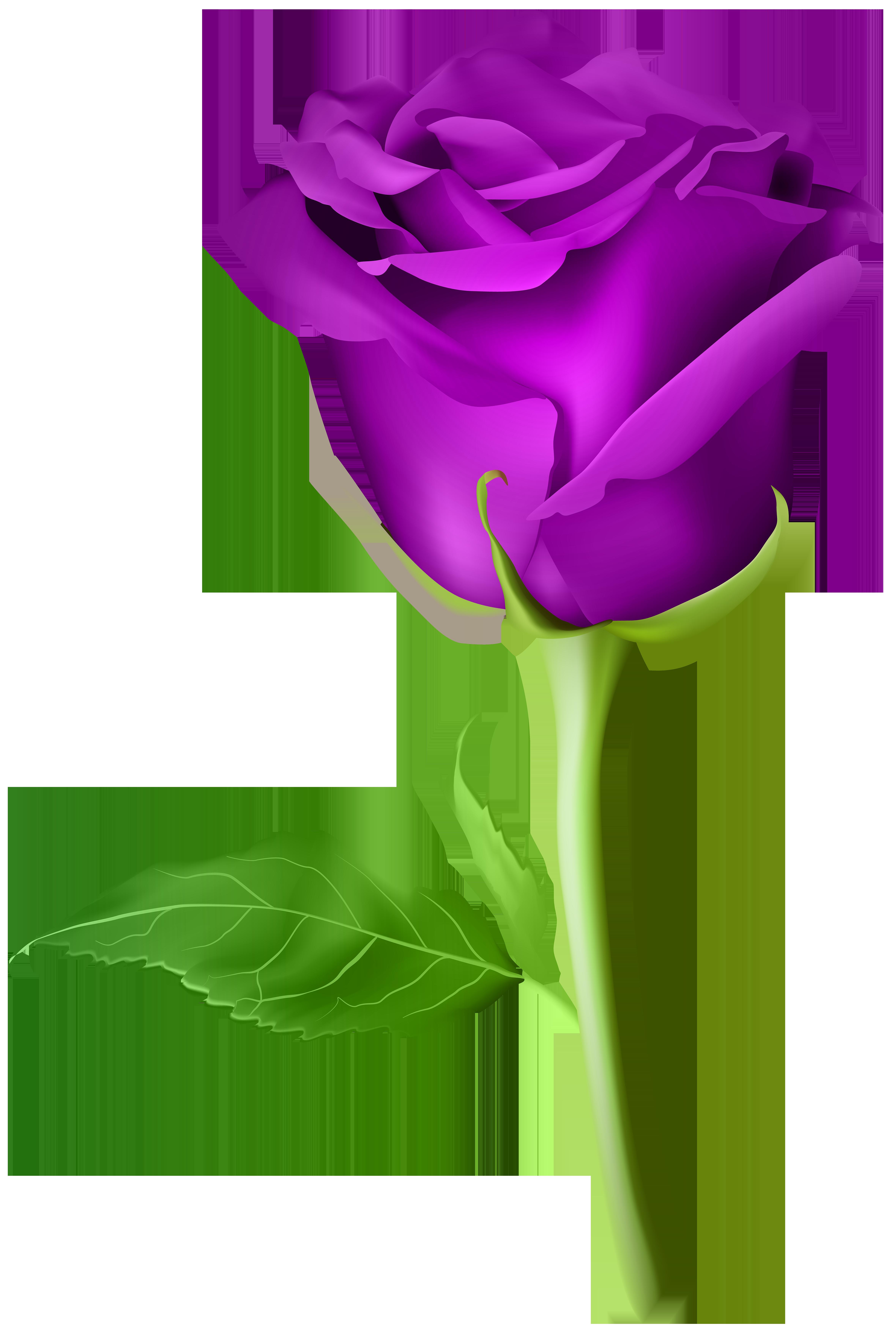 Rose Purple Transparent PNG Clip Art Image.