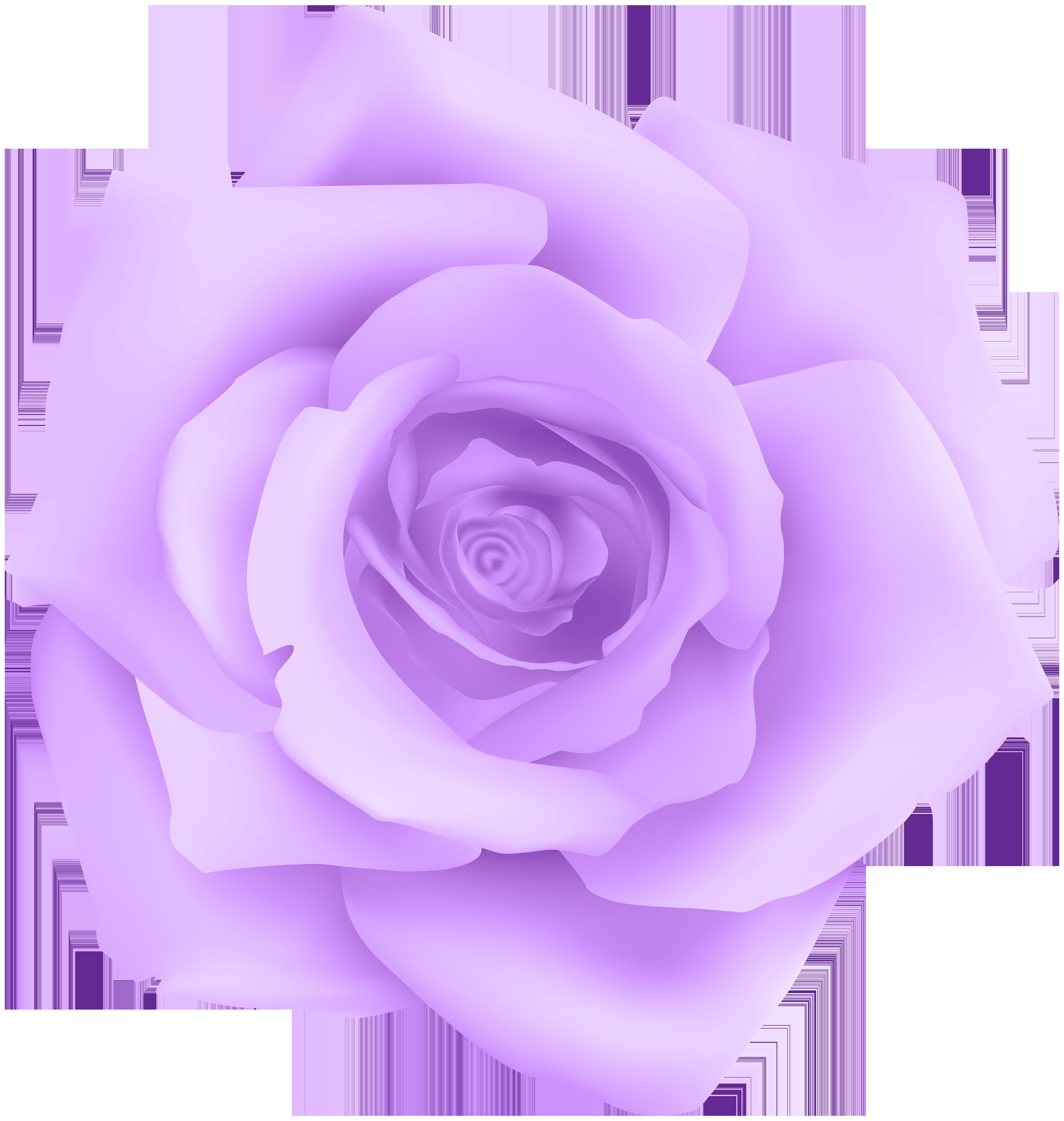 Purple Rose Transparent Clip Art.