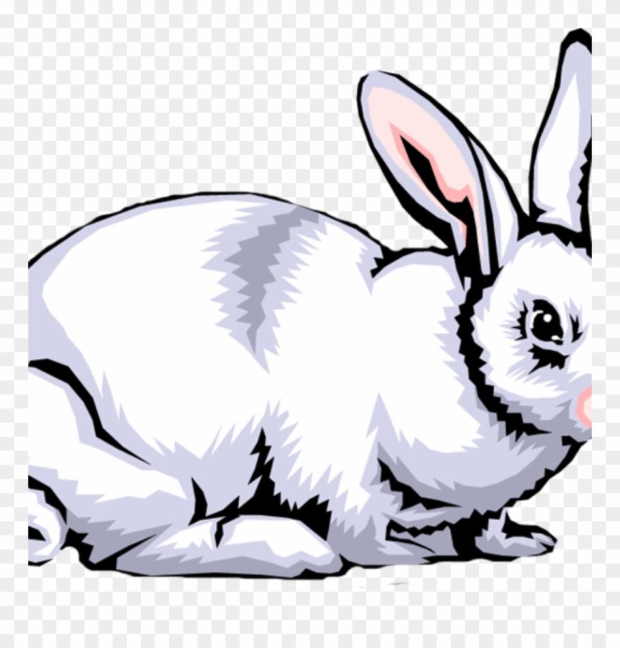 Rabbit Clipart Free Rabbit Clip Art Images Clipart.