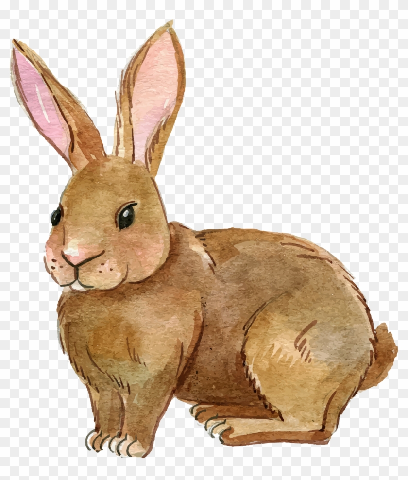Rabbit Clipart Rabbit Clipart Png Image.