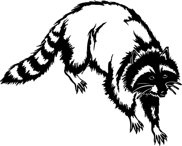 Free Raccoon Clipart, Download Free Clip Art, Free Clip Art on.