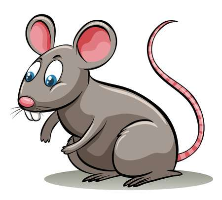 13,967 Rat Stock Vector Illustration And Royalty Free Rat Clipart.