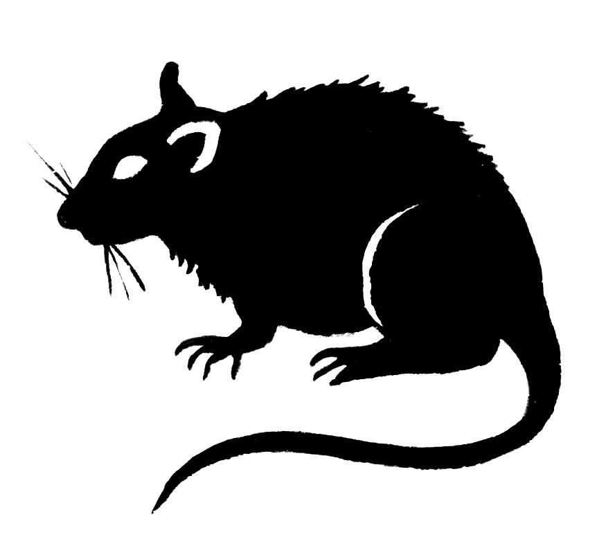 Rat Clip Art.