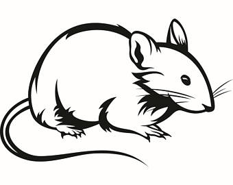 Rat Clipart.
