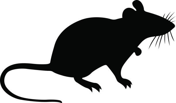 Best Rat Illustrations, Royalty.