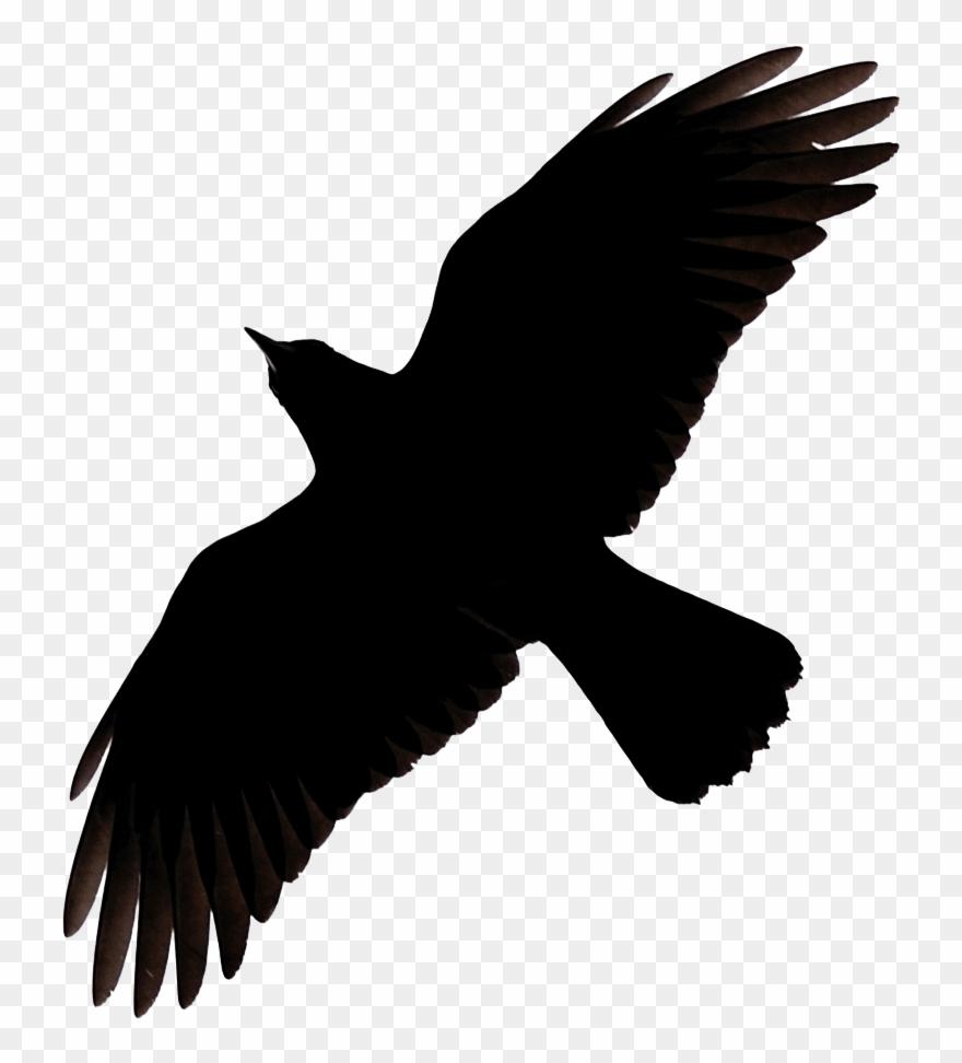 Flying Crow Raven Clip Art.