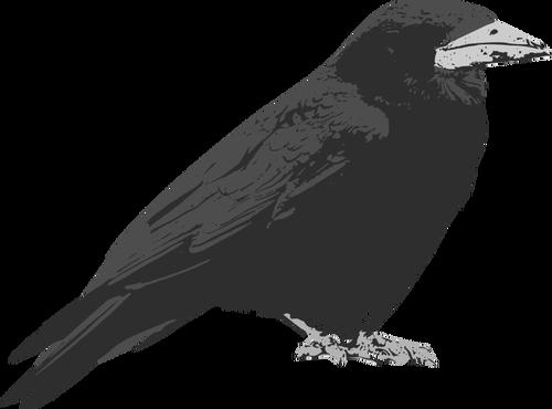 Raven bird vector clip art.