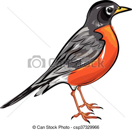 Robin Illustrations and Stock Art. 5,451 Robin illustration and.
