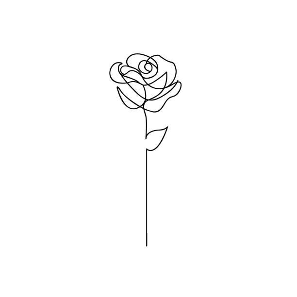 Best Rose Line Art Illustrations, Royalty.