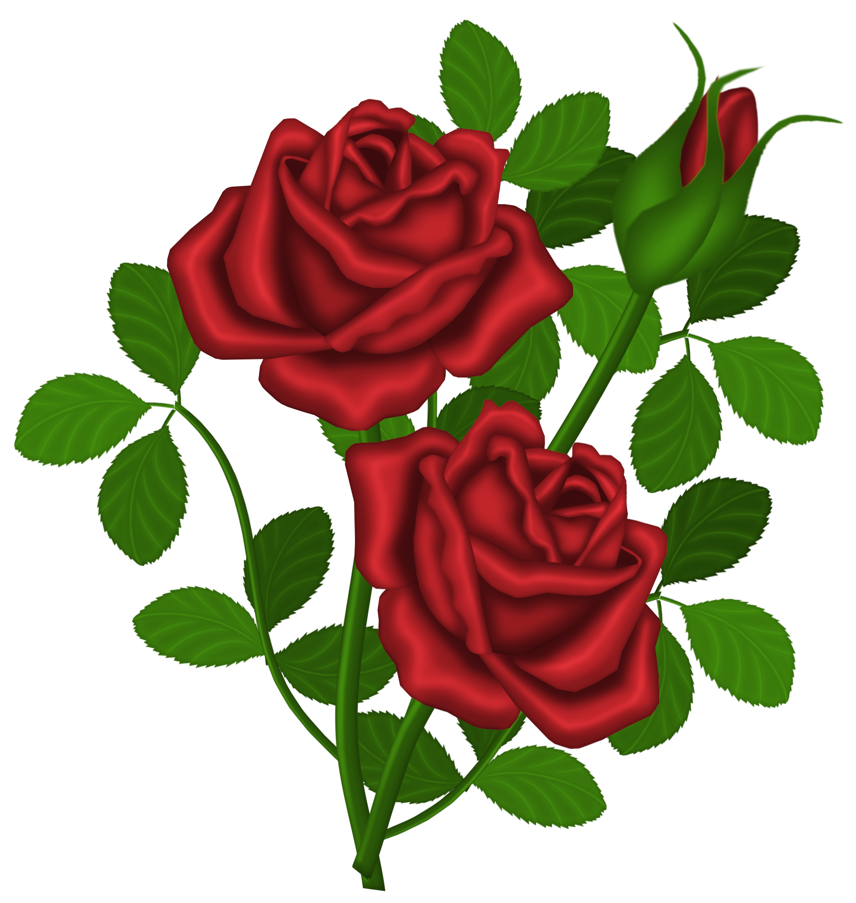 Red Roses PNG Picture Clipart.