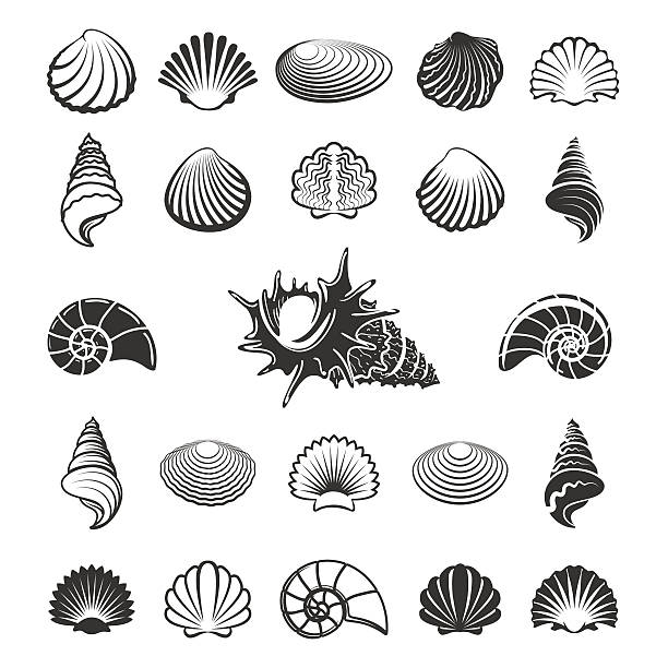 Best Sea Shell Illustrations, Royalty.