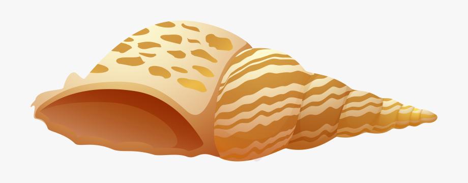 Sea Shell Png Clip Art.