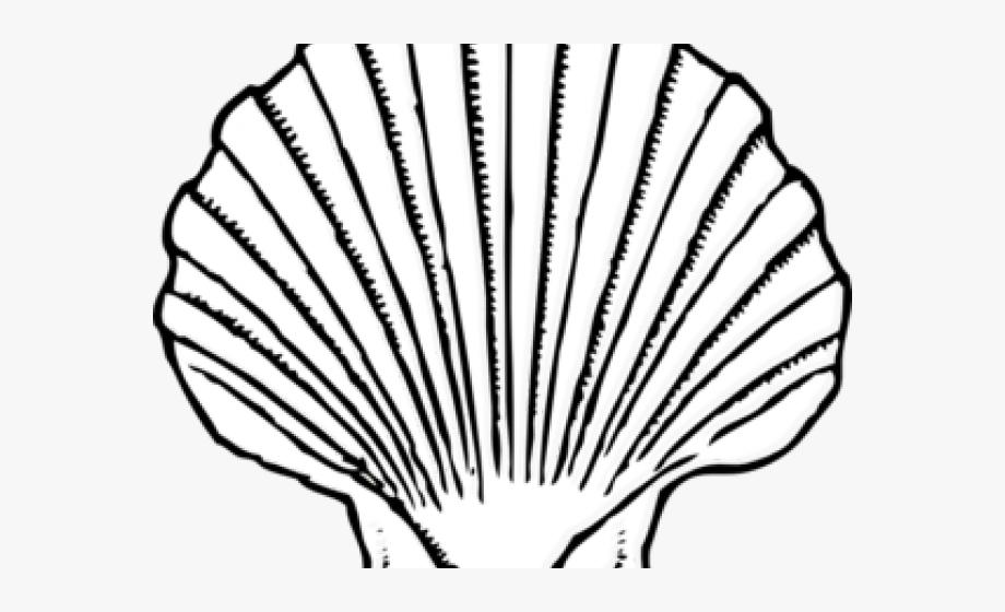 White Clipart Seashell.