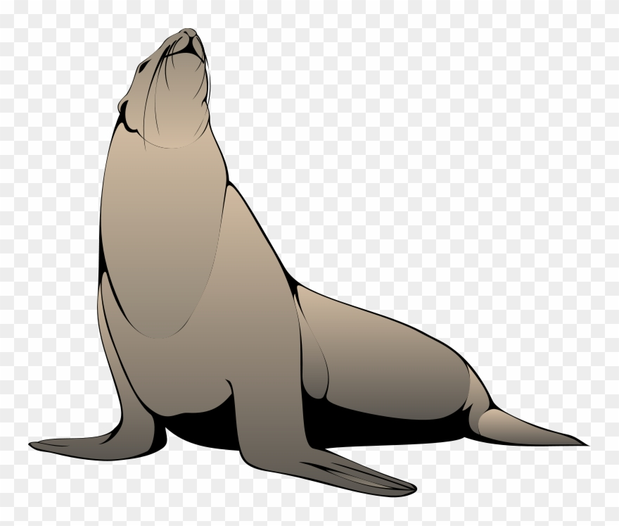 Seal Looking Up Clip Art.