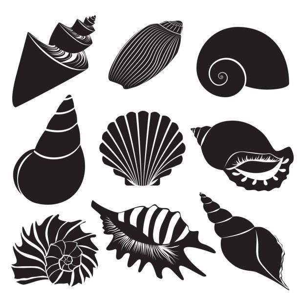Best Animal Shell Illustrations, Royalty.