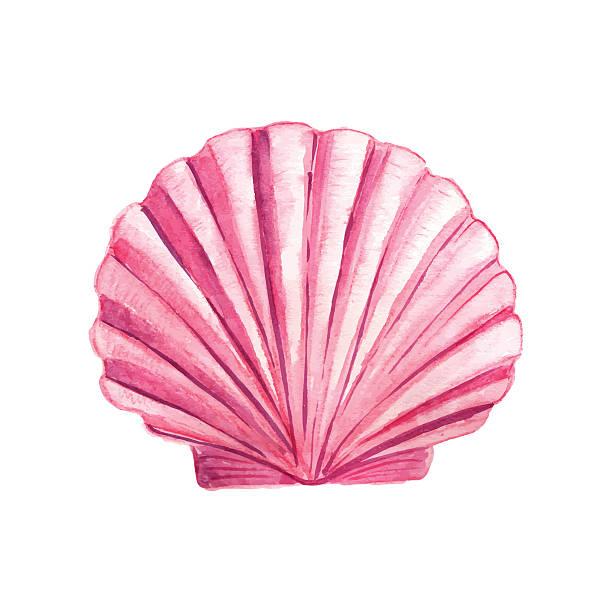 Best Sea Shell Illustrations, Royalty.