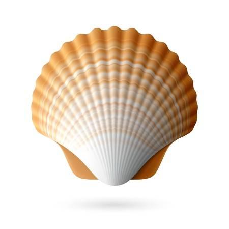 22,563 Seashells Stock Vector Illustration And Royalty Free.
