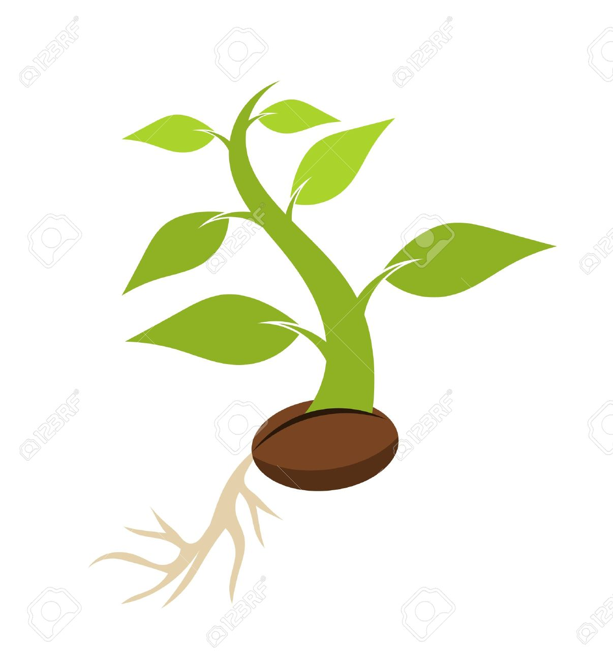 Tree seed clipart 1 » Clipart Station.